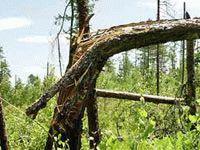 Инопланетяне тоже валят лес?